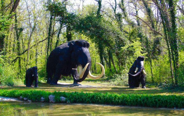 Mammut lanoso (Mammuthus)