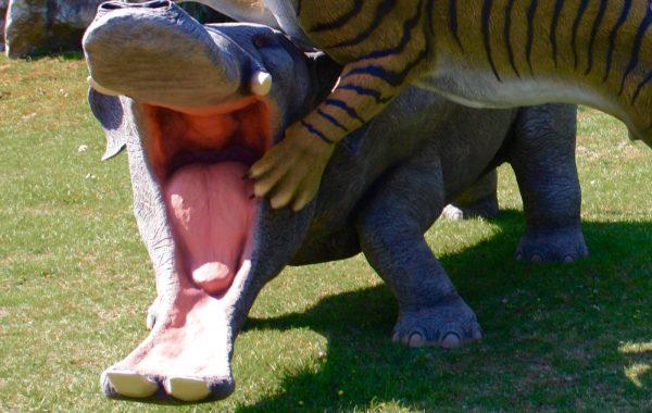 Platybelodonte (Platybelodon)