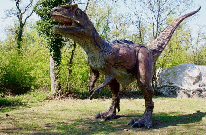 Saltriosauro