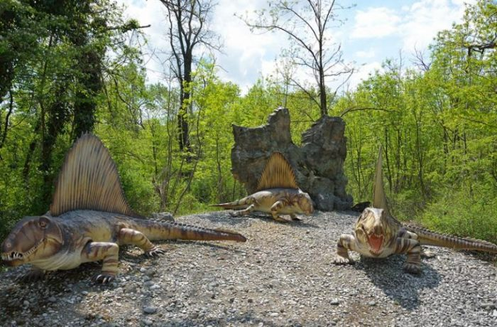 Dimetrodonte (Dimetrodon)