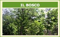 ilbosco