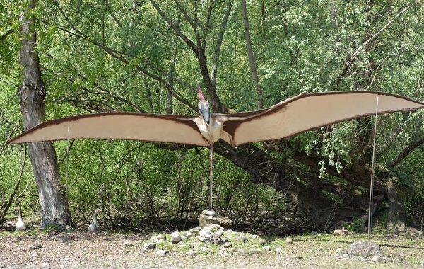 Pteranodonte (Pteranodon)
